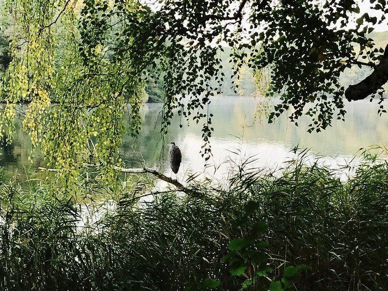 hidden swimming guide in Berlin