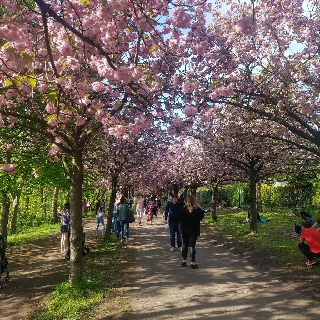 berlin parks guide